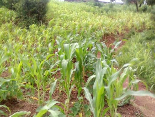 PLOT FOR SALE, Blantyre -  Malawi