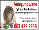 Strong Money Spells in United States (USA) | spiritual rats for money spell caster 0634299958