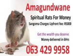 Spiritual rats or amagundwane are the one i use for a powerful money spells in usa uk canada sydney +27634299958